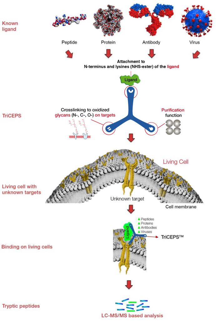 Dualsystems-Biotech-LRC-TriCEPS-Workflow-2018-5